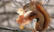 faces-53-Squirrel