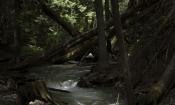 nature-50-P1-14033_