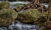 trillium-73-wild_water
